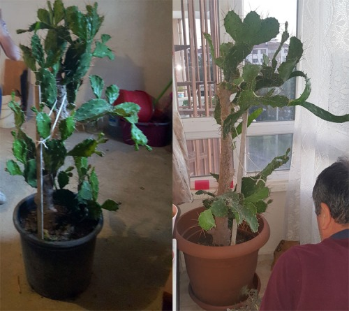 kaktus2019